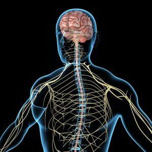 enfermedad-afecta-cerebro-medula-espinal_